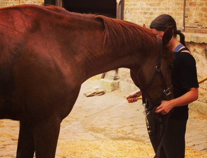 friandises_chevaux_maison