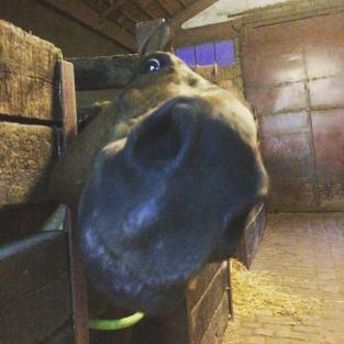 friandise_chevaux